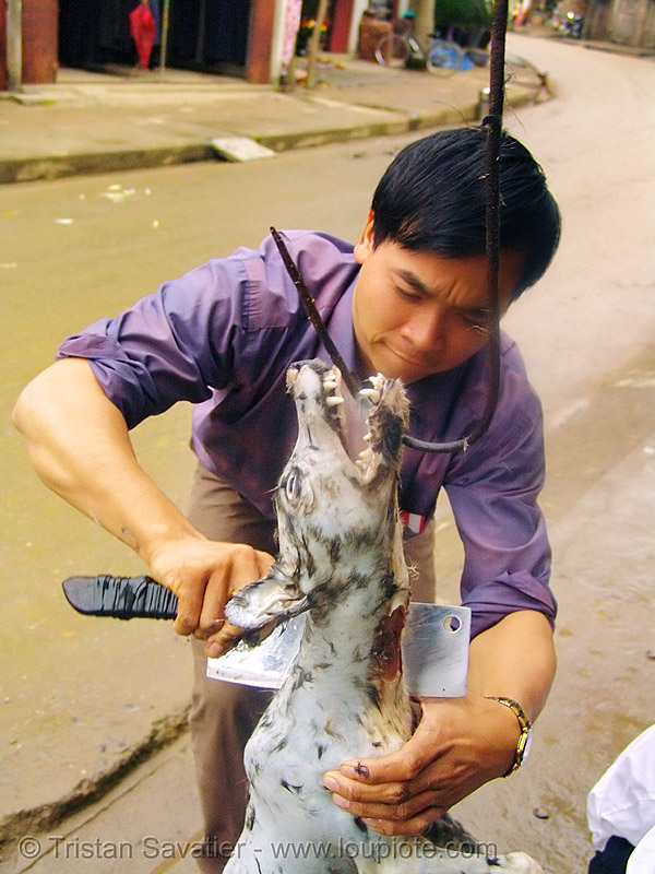dog meat - plucking - thịt chó - vietnam, butcher knife, carcass, cleaver, dead dog, food dog, hook, plucking, vietnam