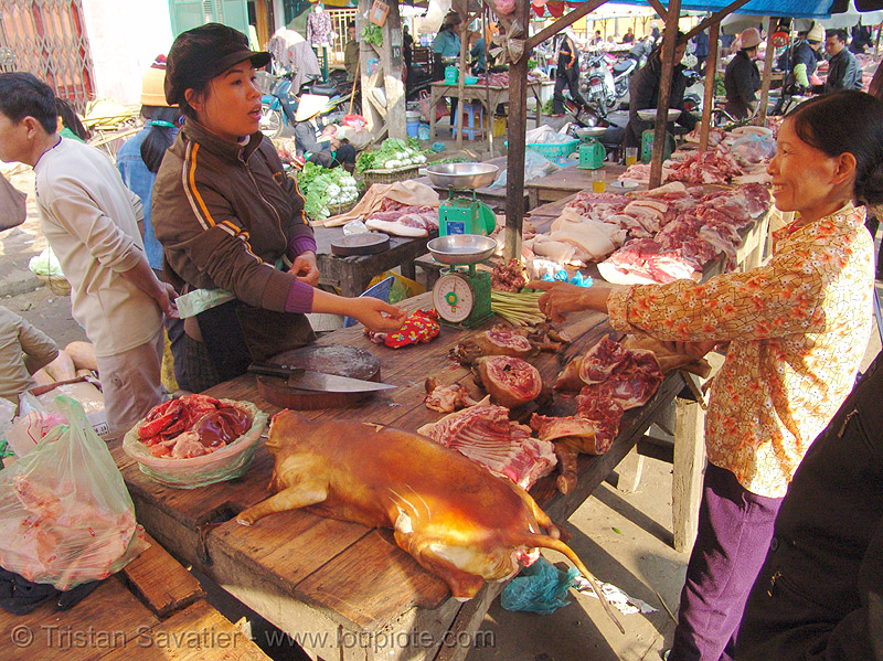 dog meat shop - vietnam, butcher, carcass, dead dog, dog meat, dogs, food dog, lang sơn, raw meat, street market