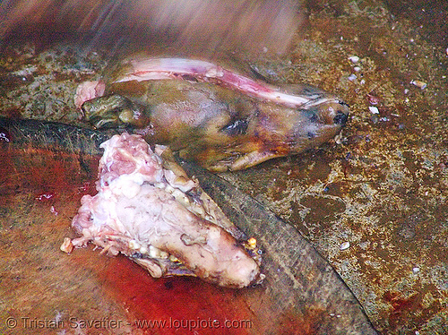 dog head and jaw - thịt chó - vietnam, butcher, carcass, dead dog, dog head, dog meat, food dog, raw meat