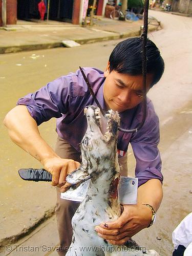 dog meat - plucking - thịt chó - vietnam, butcher knife, carcass, cleaver, dead dog, dog meat, food dog, hook, plucking