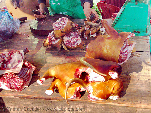 dog meat shop - thịt chó - vietnam, butcher, carcass, dead dog, dog head, dog meat, dogs, food dog, lang sơn, meat market, paws, raw meat, street market