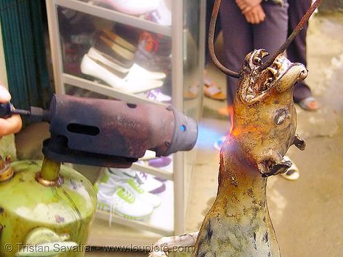 dog meat - singeing - thịt chó - vietnam, burned, burning, butcher, carcass, dead dog, dog meat, fire, flames, food dog, grilled, roasted, singeing, torch