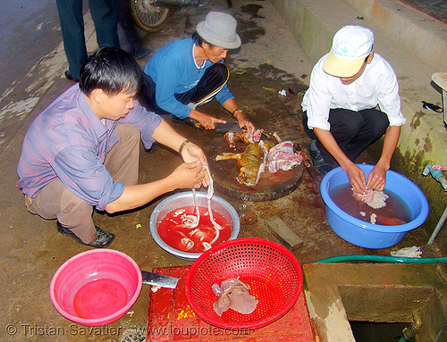 dog meat - sorting and cleaning  bodyparts and organs - thịt chó - vietnam, butcher, carcass, dog meat, food dog, raw meat