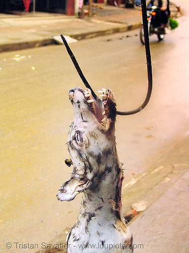 dog on hook - thịt chó - vietnam, butcher, carcass, dead dog, dog head, dog meat, food dog, hook
