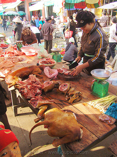 dog tail - dog meat shop, butcher, carcass, dead dog, dog meat, dogs, food dog, lang sơn, meat market, raw meat, street market, tail