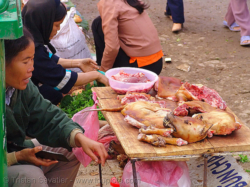 woman selling dog meat, butcher, cao bang, cao bằng, carcass, dead dog, dog head, dog meat, dogs, food dog, meat market, paws, raw meat