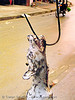 dog on hook - thịt chó - vietnam, butcher, carcass, dead dog, dog head, dog meat, food dog, hook